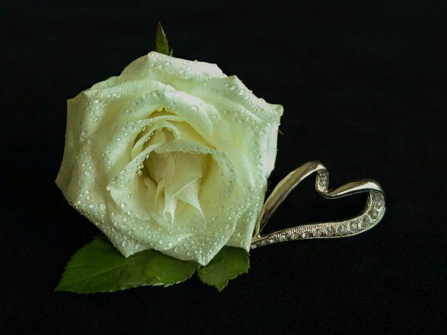 white rose 3209250 1280 640x480 - Et smykke for livet